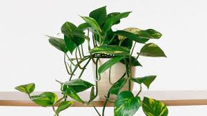 best small house plants arts
