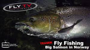 TEASER  FLY TV   Fly Fishing Big Salmon in Norway   YouTube YouTube
