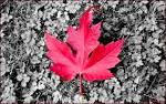 love Canada (tag love canada wallpaper far3e 1680x1050)
