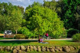 Brisbane City Botanic Gardens by Gold Coast Regional Botanical Gardens Stuff To Do In Brisbane