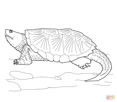 common snapping turtle coloring page free printable coloring pages