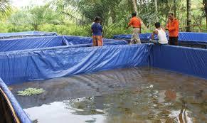 Permalink to Peluang Budidaya Ikan Lele yang Mudah dan Menguntungkan