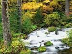 Willamette National Forest Autumn Oregon