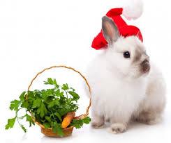 рік кролика