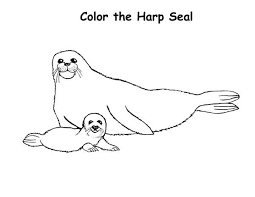 harp coloring page baby harp seal and his mother coloring page coloring sky