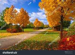 Maple Tree Symbolism by Grossraeschen Avenue Maple Trees Fall Nice Stock Photo 400762774