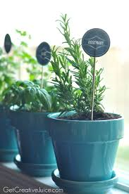 tips and tricks to maintaining an indoor kitchen herb garden