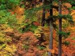 Wallpapers Backgrounds - Wallpapers Forests Russeted Woodland Cascade Mountains Washington