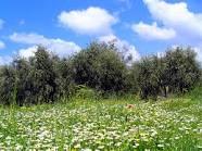 فصل الربيع Images?q=tbn:ANd9GcTGZbEtBATPeNOgcnkScKDDxqE7UHhiCJGbCMNe-VMS47mQ36grosGPYooALg