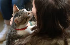 This is why you care more about some animals than you care about     BDCwire A visitor pets a cat at the pop up  quot Cat cafe quot   a