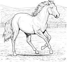 horses to color wallpaper download cucumberpress com