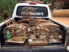 Jovem é detido com pássaros da fauna silvestre em Divinópolis (MG)