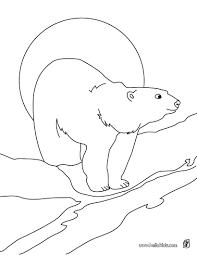 polar bear printable coloring pages hellokids com