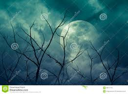spooky halloween forest royalty free stock photo image 25365425