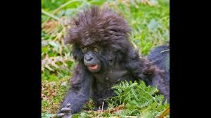 Funny Animals Bad Hair Day Slideshow Youtube