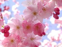 வால்பேப்பர்கள் ( flowers wallpapers ) 01 - Page 3 Images?q=tbn:ANd9GcTIb4cjkjksakL05U9-Xbfjx4ucL1l30KWPU-3OyP6ap7ujnZl6Jw