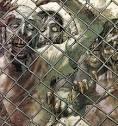 the The Walking Dead (TV