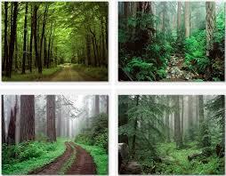 خلفيات غابة
