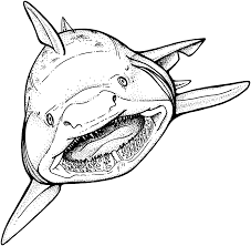 tiger shark coloring page coloring pages online 7246