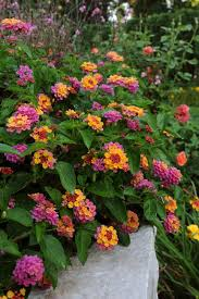 Flowers Plants by 14 Plants That Stink Hgtv