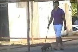 Cachorro que fugiu em ônibus é encontrado e volta para o tutor