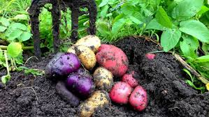bountiful harvest in the organic vegetable garden youtube