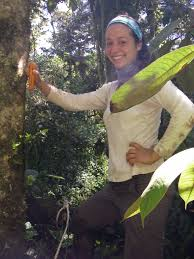 PhD thesis   Ecology of the past MLC Ecuador