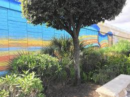 Golf Murals by Holy Land Mural A Surprise To State U2013 Which Owns Wall It U0027s Painted