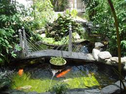 outdoor koi pond with deck tips to caring the koi ponds