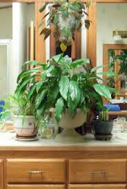 make the best of things house plant fanatic