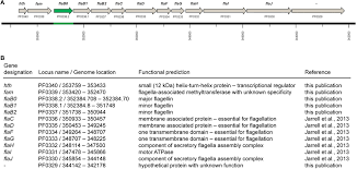 Frontiers   Pyrococcus furiosus flagella  biochemical and     Frontiers www frontiersin org