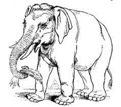 გაკვირვებული სპილო