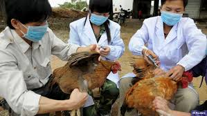 Cases of Bird Flu/Avian Influenza