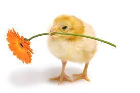 poussin et fleur joyeuse Pâques