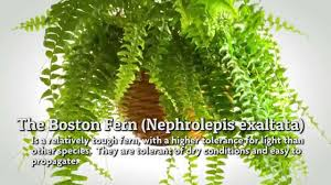 popular indoor houseplants youtube