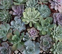 Succulents Pots For Sale by 4