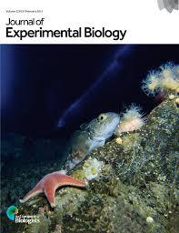 ammonia excretion in the marine polychaete eurythoe complanata