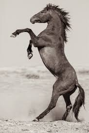 thanksgiving horse pictures join the fight to save our wild horses thanksgiving coffee