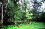 ป่าดิบชื้น - วิกิพีเดีย