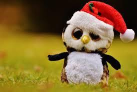 free images bird sweet flower cute christmas owl teddy