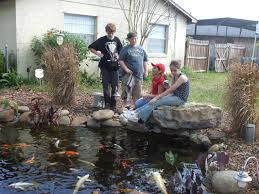kids backyard koi pond orlando florida water garden experts