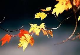 Foglie di novembre