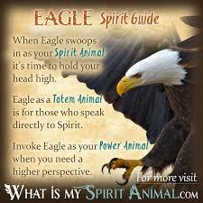 Maple Tree Symbolism by Eagle Symbolism U0026 Meaning Spirit Totem U0026 Power Animal