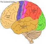 1. the <b>cerebral cortex</b>