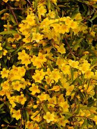 Flowers Plants by Why You Should Sow Wildflower Seeds During Winter Hgtv