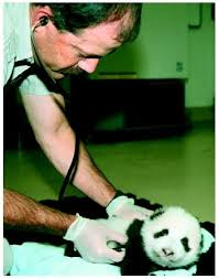 Example Zoology Resume   http   resumesdesign com example zoology