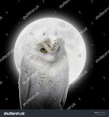 scary moon background white owl bird against bright glowing stock photo 127768712