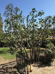 the backyard makeover part 1 emily henderson