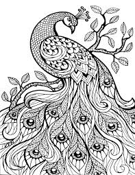 printable animal coloring pages for adults coloringstar