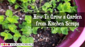 how to grow a vegetable garden from kitchen scraps youtube